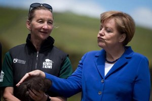 "German Chancellor Angela Merkel too ""tangled"" with a koala backstage. But here we see her petting a kiwi bird during her recent visit to Auckland."